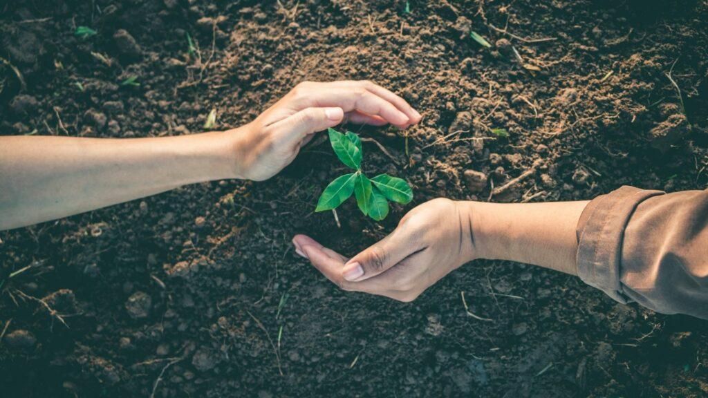 dwie dłonie na tle brązowej ziemii formułują kule. W środku kulii znajduje się zielona sadzonka.